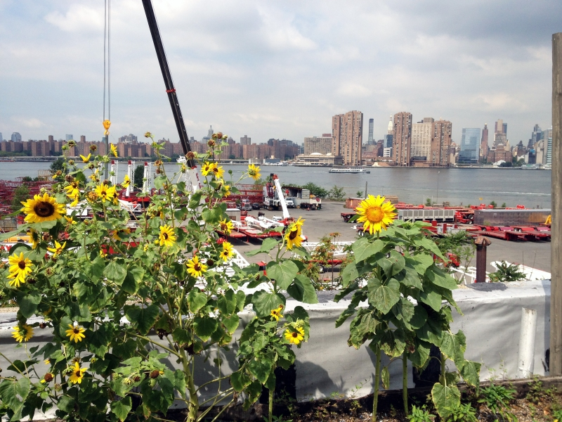 Eagle Street Rooftop Farm