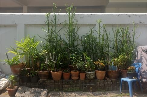 #plantgoals