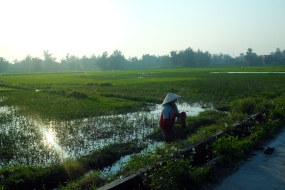 Biking the rice paddies of Hoi An.