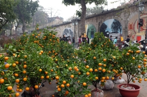 Kumquat trees : Tet :: Evergreens : Christmas.