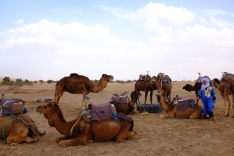 Camels at the ready in Merzouga.