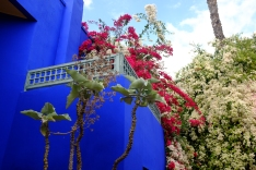 The Jardin Majorelle.